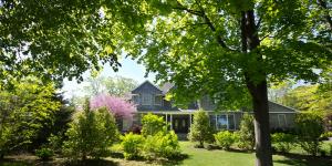 shade tree house