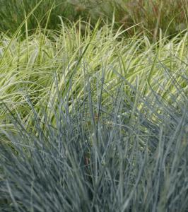 ornamental grasses Minter Country Garden
